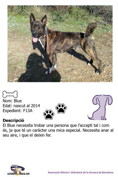Fitxes gossos_page-0002