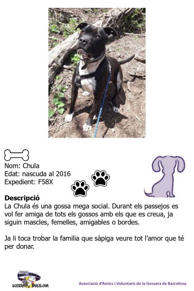 Fitxes gossos_page-0003