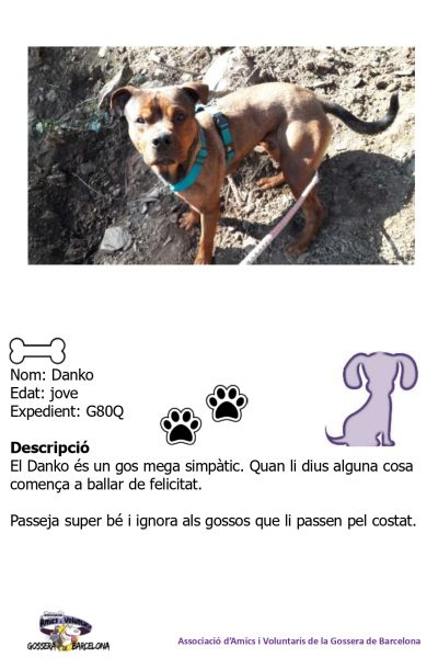 Fitxes gossos_page-0004