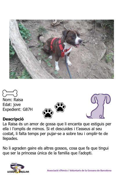 Fitxes gossos_page-0007