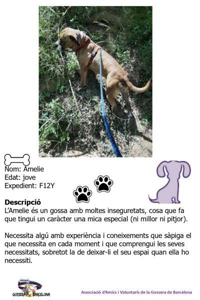 Fitxes gossos_page-0008
