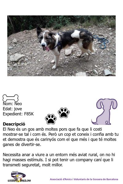 Fitxes gossos_page-0009