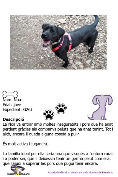 Fitxes gossos_page-0010
