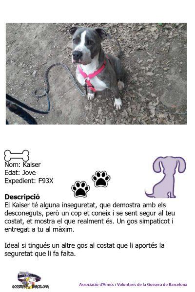 Fitxes gossos_page-0011