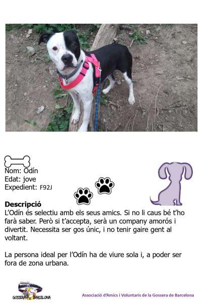 Fitxes gossos_page-0012