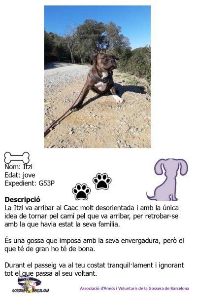 Fitxes gossos_page-0013