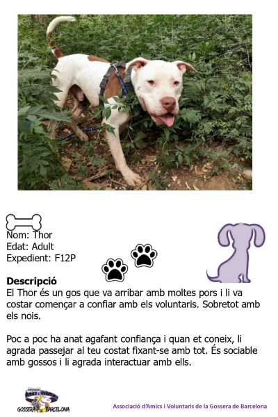 Fitxes gossos_page-0014