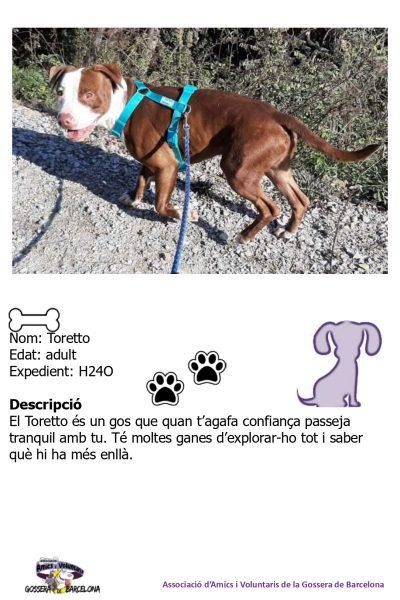 Fitxes gossos_page-0015