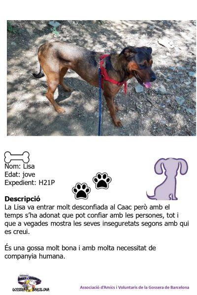 Fitxes gossos_page-0016