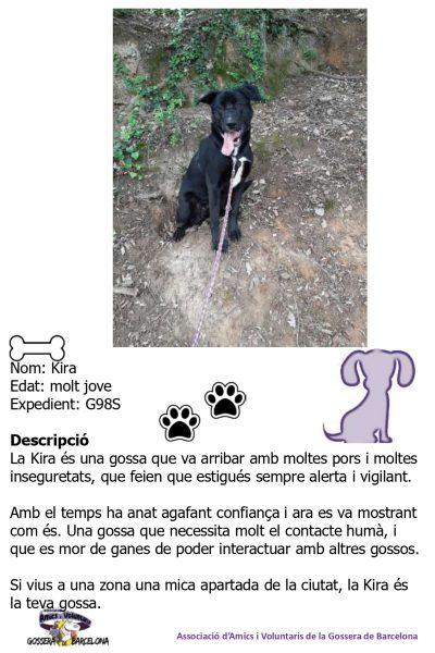 Fitxes gossos_page-0017