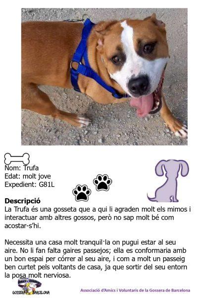Fitxes gossos_page-0018