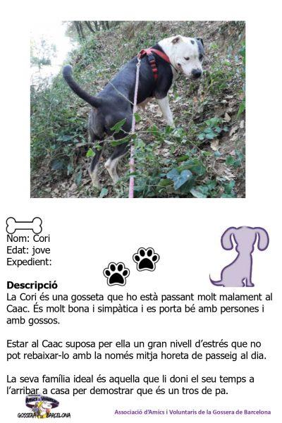 Fitxes gossos_page-0019