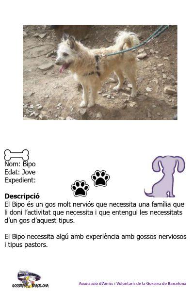 Fitxes gossos_page-0020